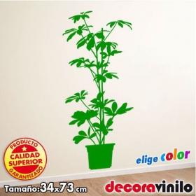 Planta - 34x73 cm